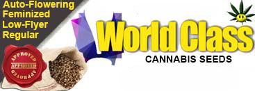 World Class Cannabis Seeds
